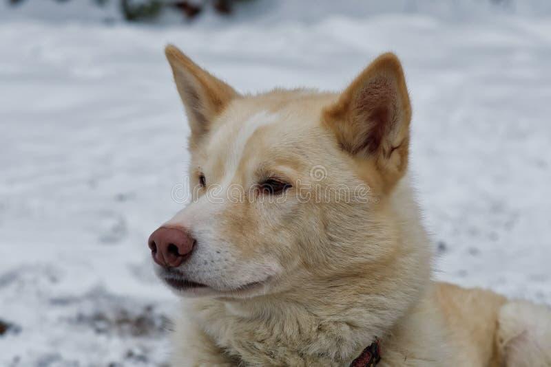 Portret van schor hond openlucht royalty-vrije stock fotografie