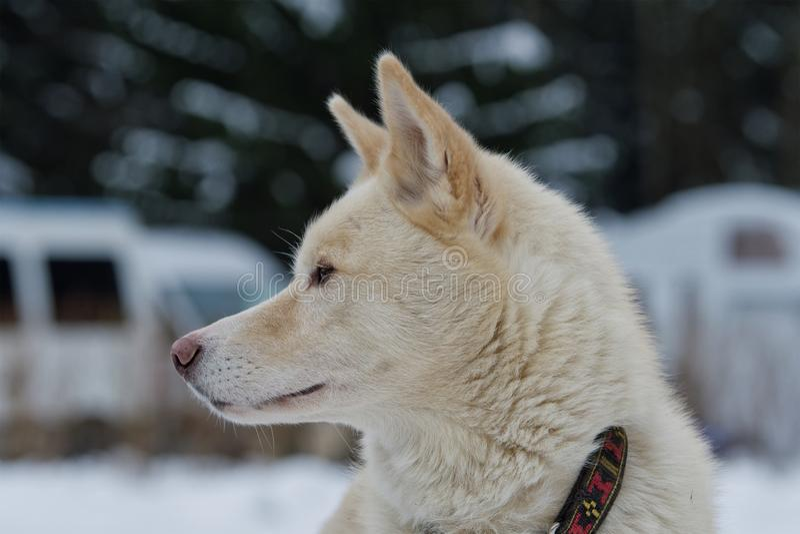 Portret van schor hond openlucht stock foto's