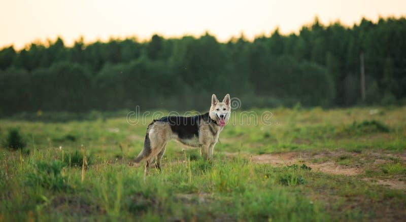 Portret van vuile bastaarde hond die zich op groen gebied bevinden en camera bekijken Y stock foto