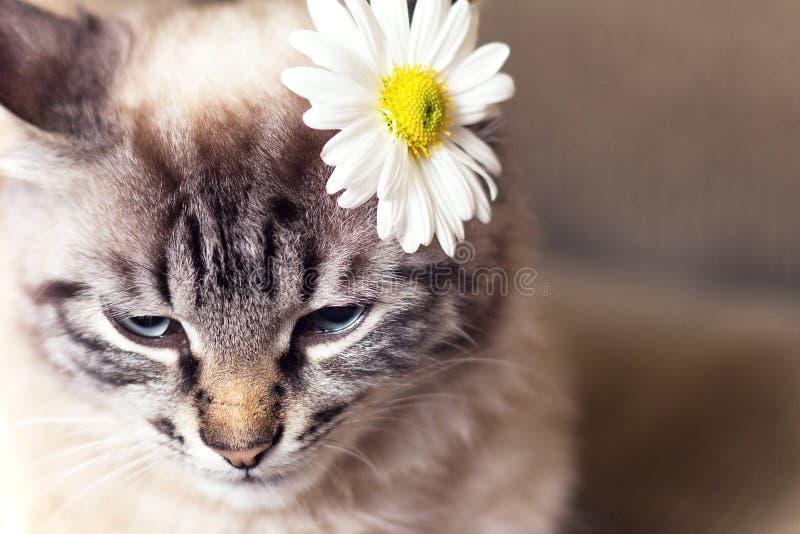 Portret van weinig pluizig katje op de laag stock foto
