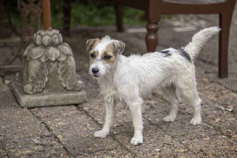Portret van witte hond op de vloer bruine baksteen royalty-vrije stock afbeeldingen