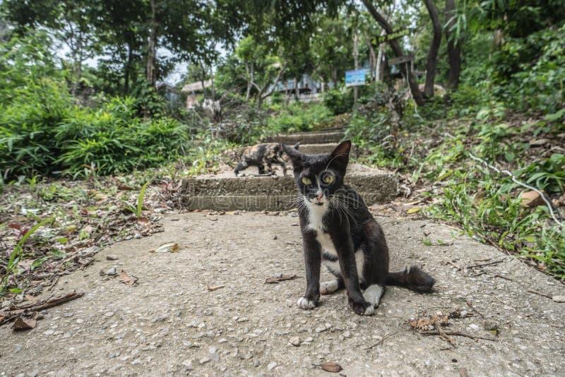 Portret van zwart-witte kattenzitting op steen en het onderzoeken van camera over groene gras en bomenachtergrond stock afbeelding