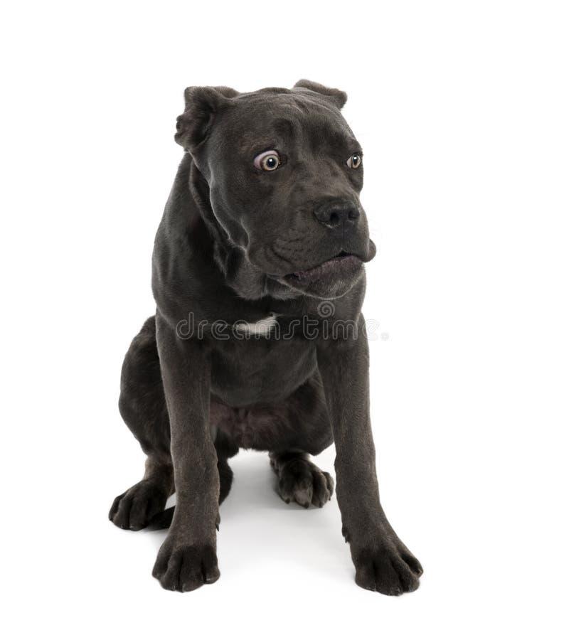 Portret van zwarte gemengde bastaardhond met droevig gezicht stock afbeelding