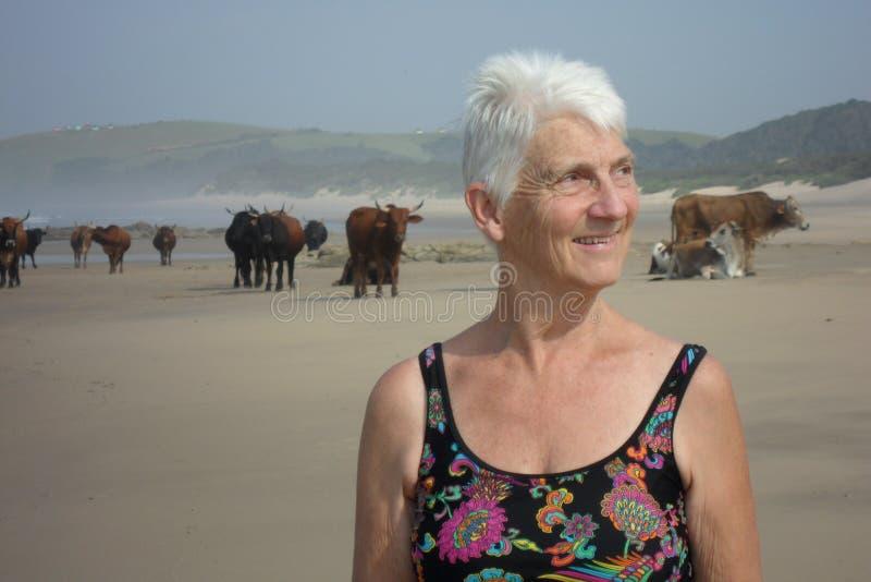 Portret wśród plażowych krów Transkei zdjęcie stock