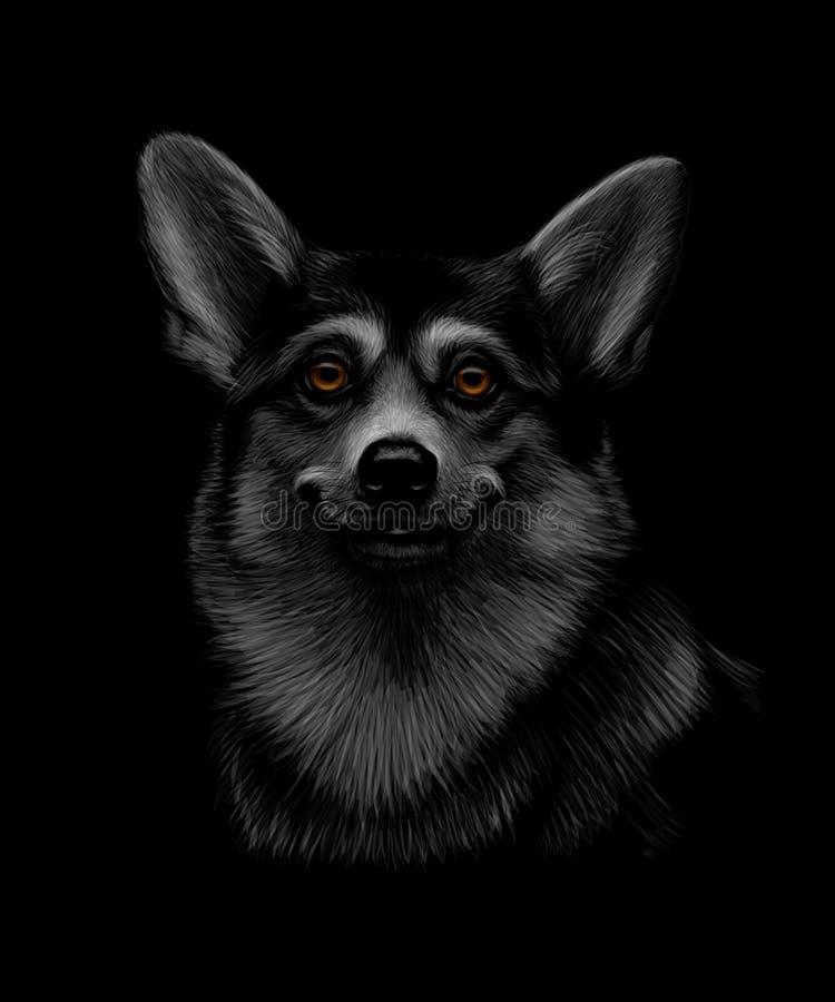 Portret Walijska Corgi głowa na czarnym tle ilustracja wektor