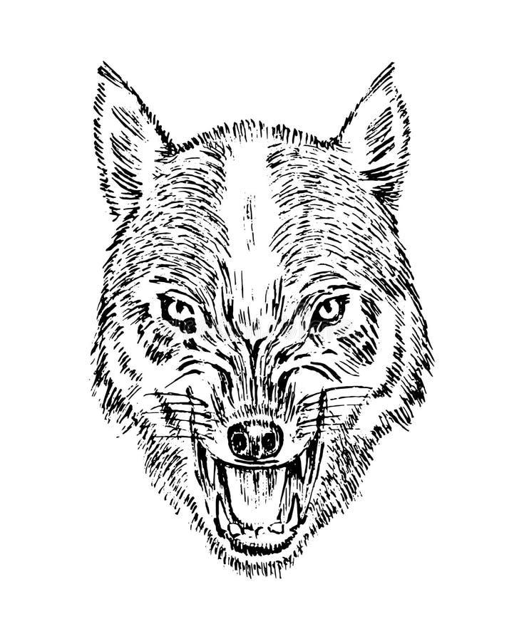 portret wilk Głowa dzikie zwierzę i Gniewny poryk drapieżnik Psia twarz Odznaki lub emblemata wektoru ilustracja royalty ilustracja