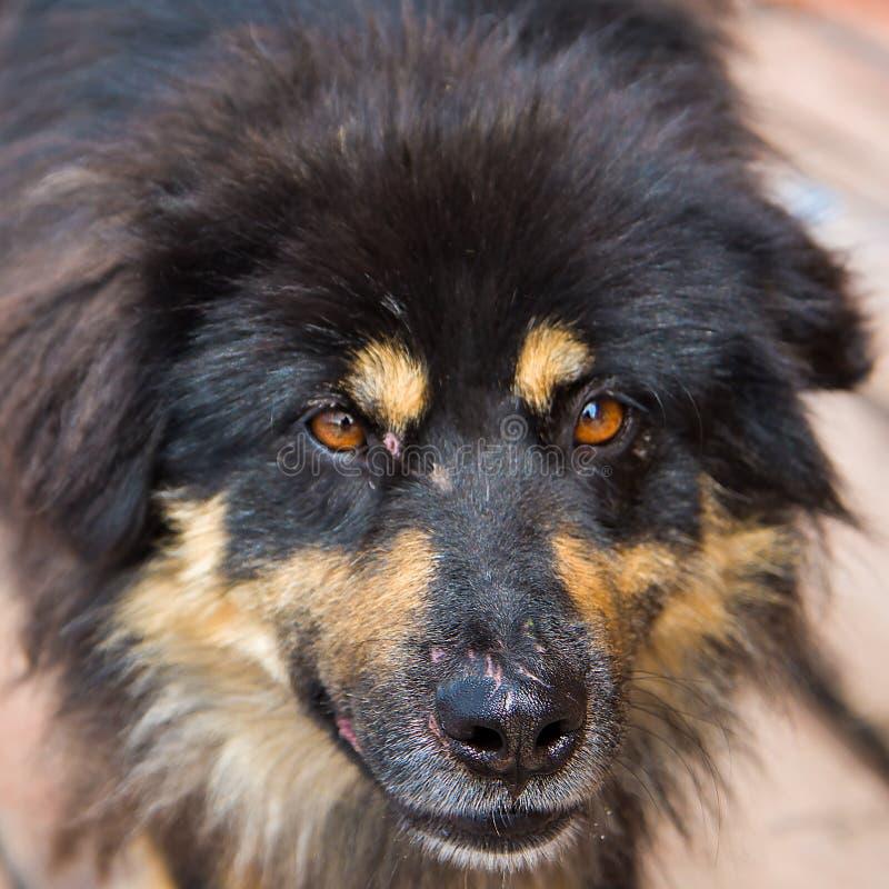 Portret zły bezdomny pies obrazy royalty free
