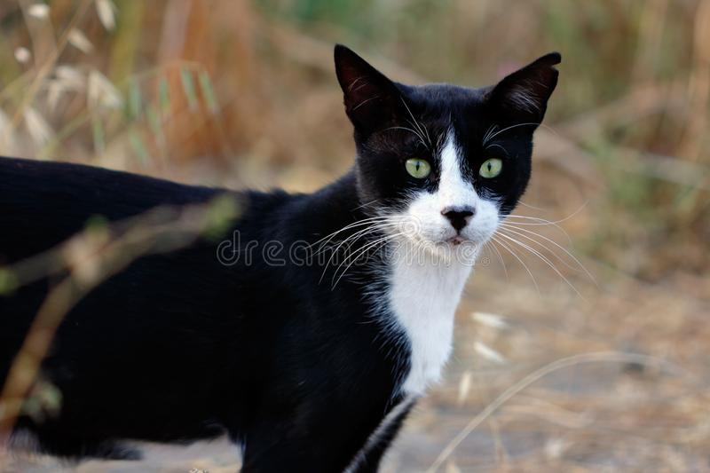 Portret zdziczały biały kot w wsi zdjęcia royalty free