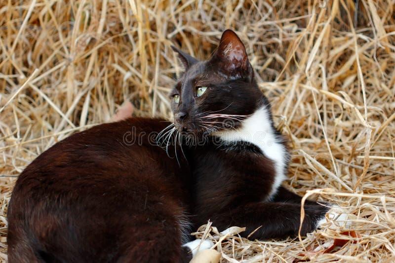Portret zdziczały biały kot w wsi zdjęcie royalty free