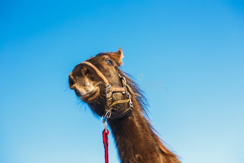 Portret zdziwiony arabski źrebak przeciw niebieskiemu niebu fotografia royalty free