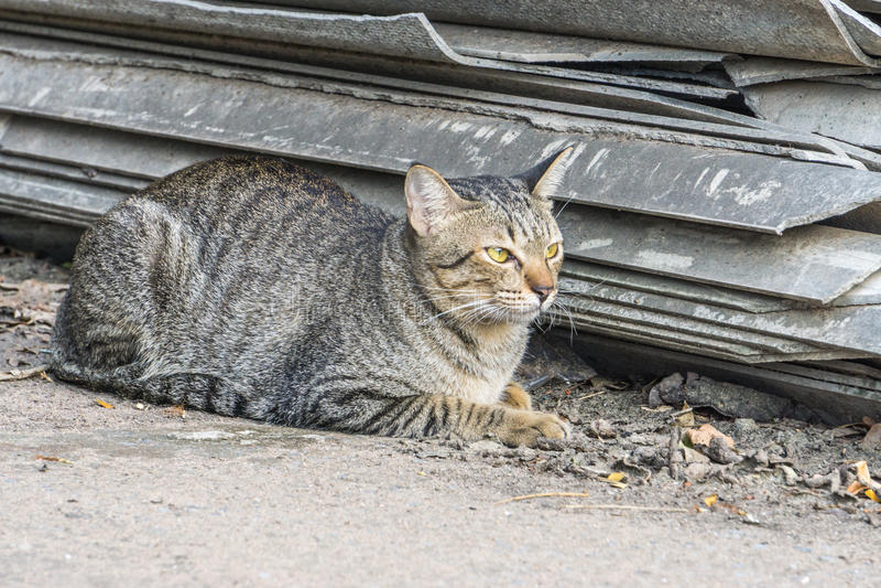 Portreta brązu i kota oczy obraz royalty free