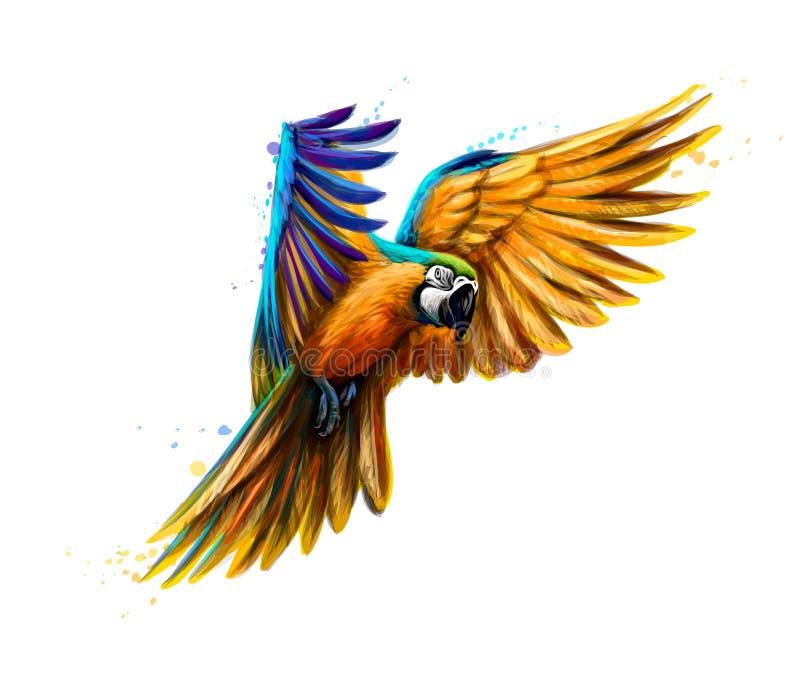 Portreta koloru żółtego ara w locie od pluśnięcia akwarela Aron papuga, Tropikalna papuga royalty ilustracja