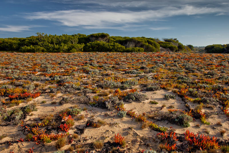 Portugal Coast Vegetation Stock Photography Image - Portugal vegetation map