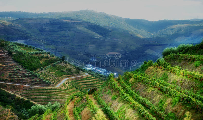 Portugal Douro Valley Vineyards Landscape. Panoramic view of Douro Valley vineyards on the mountains of north Portugal,where famous Port Wine is born stock images