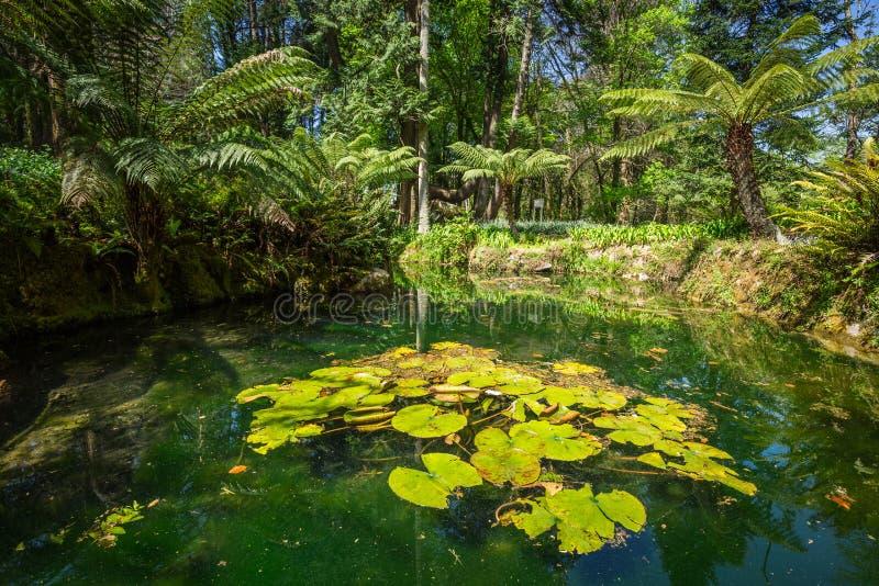 Portugal, jardim do palácio de Monserrate em Sintra foto de stock