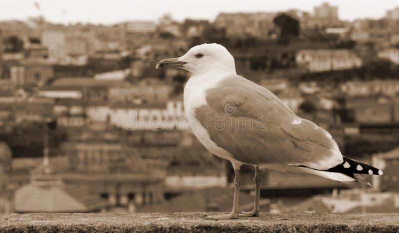 Download Portugal Porto Stad De Zeemeeuw Op De Achtergrond Van Aeria Stock Afbeelding - Afbeelding bestaande uit middeleeuws, aalscholver: 54089433
