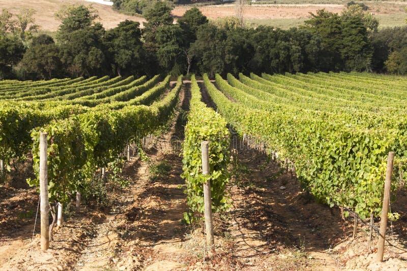portugal winnica zdjęcie royalty free