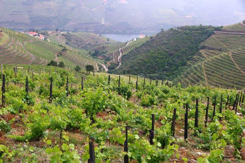 Portugalia wina region obraz royalty free