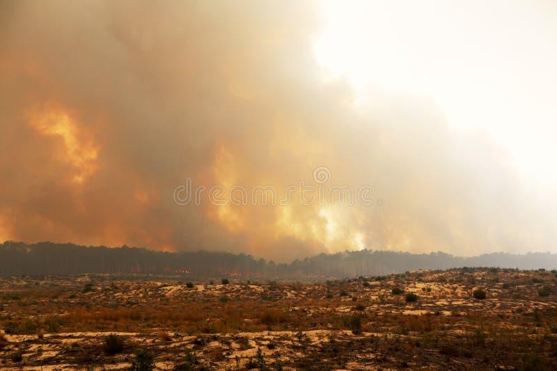 Portugisisk skogbränning arkivfoto