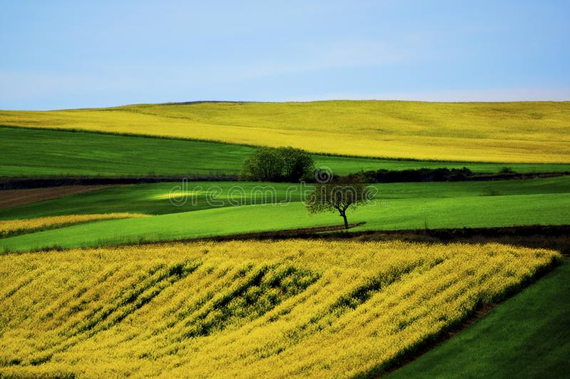 Portuguese Rustic Landscape. Colorful Portuguese Rustic Landscape with Green Grass and Yellow Flowers Fields and on Blue Sky Horizon in Sunny Day Outdoors stock image