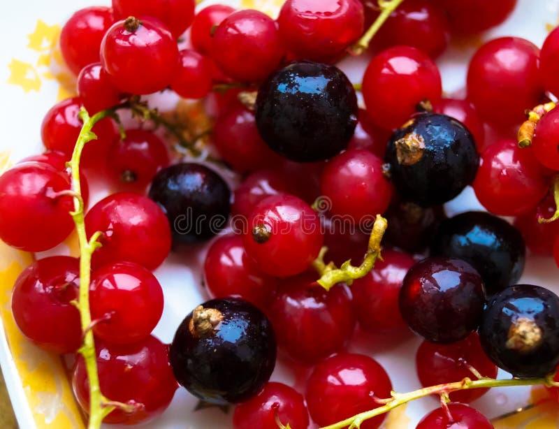 Porzeczkowe jagody makro- zdjęcie stock