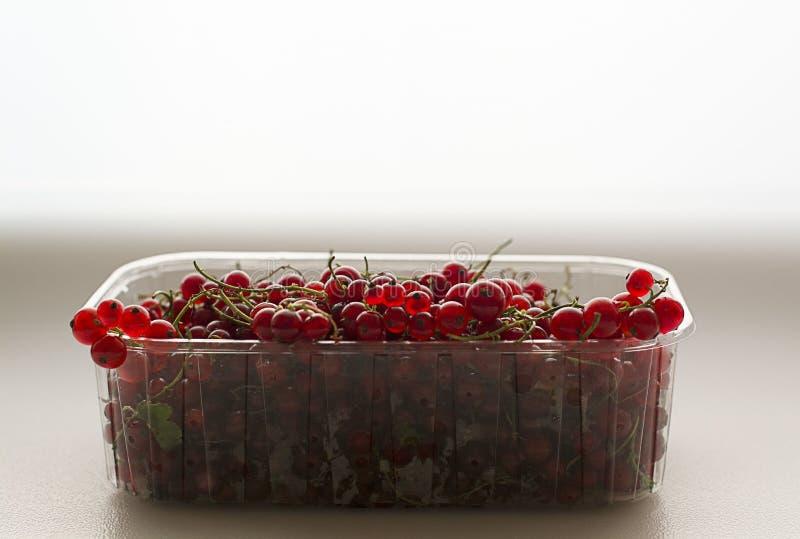 Porzeczkowe jagody na białym tle w plastikowym przejrzystym zbiorniku Porzeczkowe jagody na białym tle w klingerycie zdjęcie stock