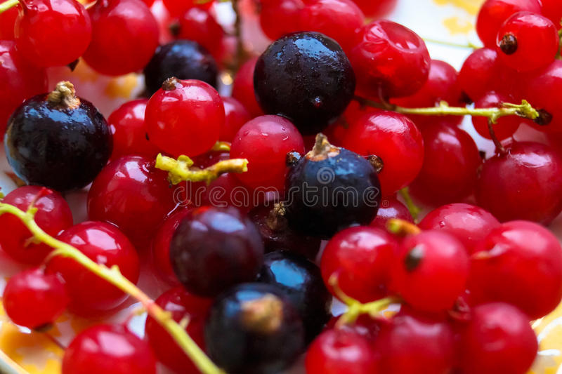 Porzeczkowych jagod makro- fotografia zdjęcia royalty free