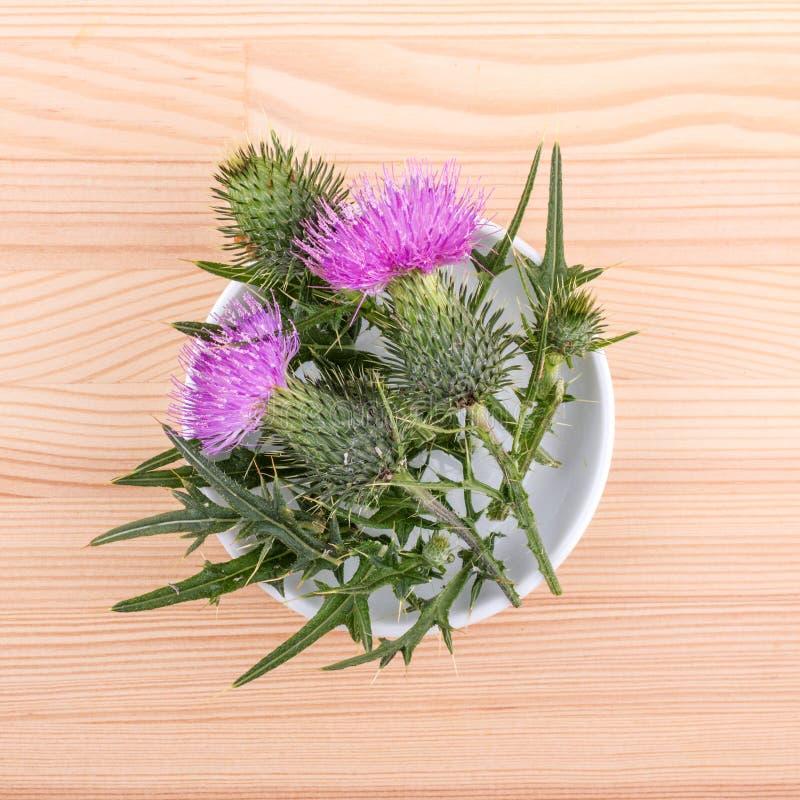 Porzellanschüssel mit dem Blühen von Mary-Distel lizenzfreie stockfotos