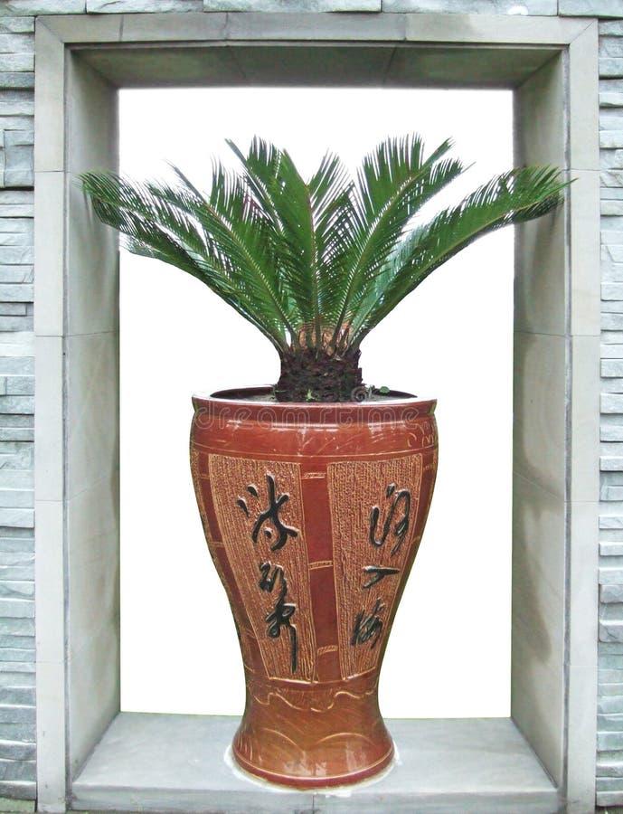 Porzellanvase und -sago Cycad stockbild