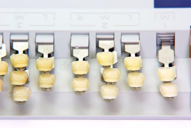 Porzellanzähne - Farbenanleitung lizenzfreie stockfotografie
