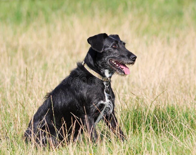 Posłuszny pies zdjęcia stock