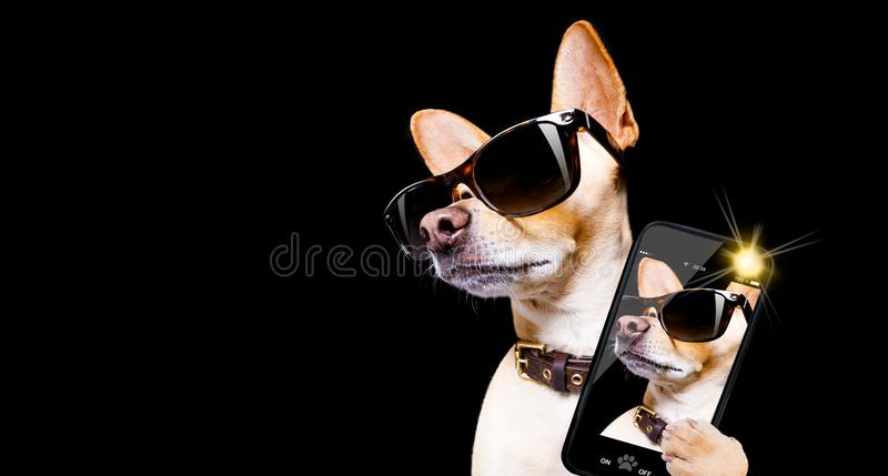 Posa del cane con gli occhiali da sole immagini stock
