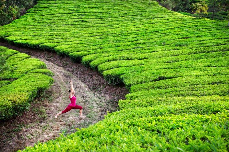 Posa del guerriero di yoga nelle piantagioni di tè fotografie stock libere da diritti