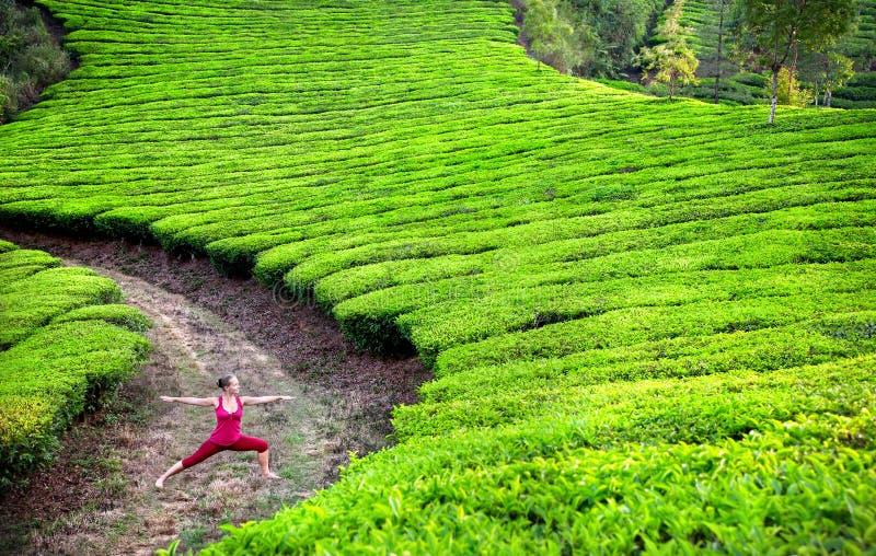 Posa del guerriero di yoga nelle piantagioni di tè fotografia stock libera da diritti