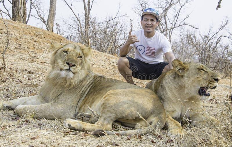 Posa pericolosa con il leone e la leonessa immagine stock