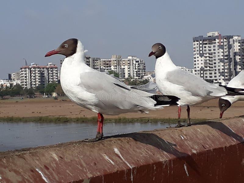 Posadzony ptak w spokojnym momencie obrazy royalty free