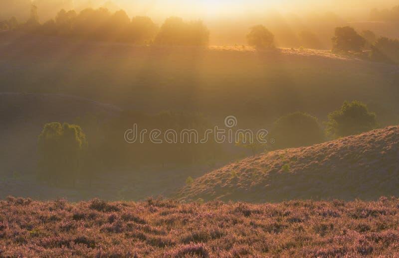 Posbank Veluwe, lever de soleil photographie stock libre de droits