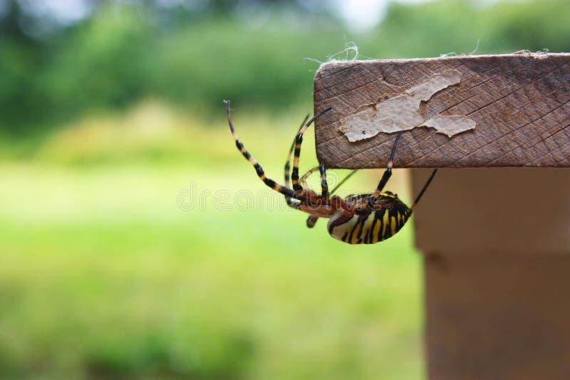 Pose colorée d'araignée photos stock