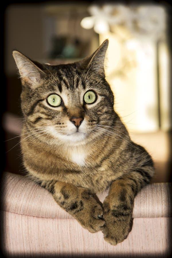Pose de chat photographie stock