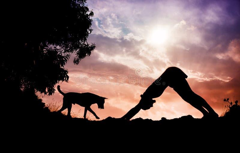 Pose do cão da ioga fotos de stock royalty free