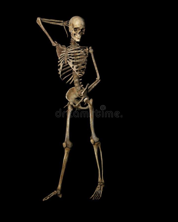 Pose du squelette illustration de vecteur