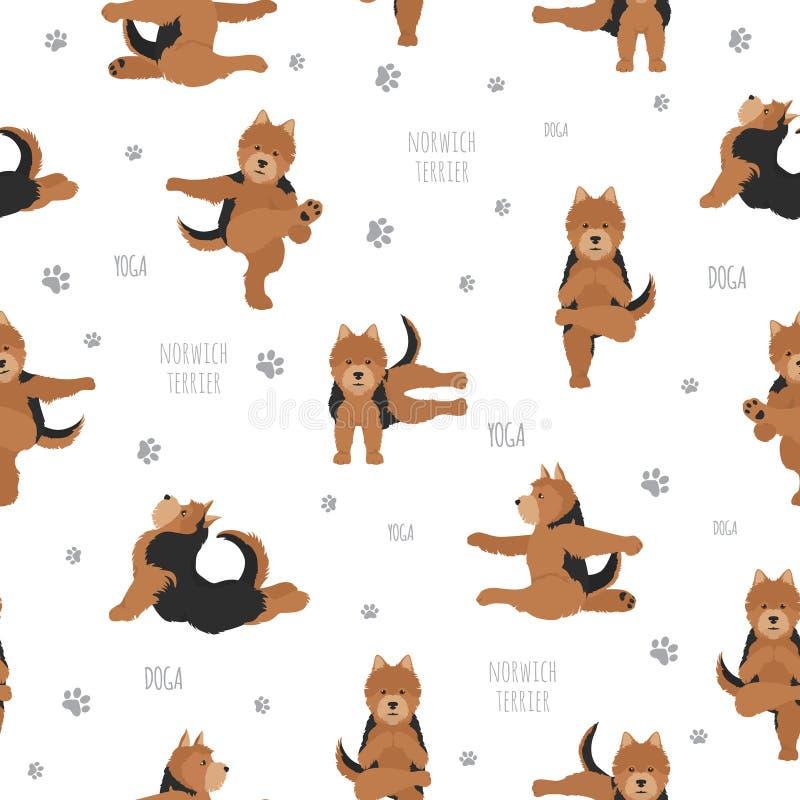 Pose ed esercizi dei cani di yoga Modello senza cuciture del terrier di Norwich royalty illustrazione gratis
