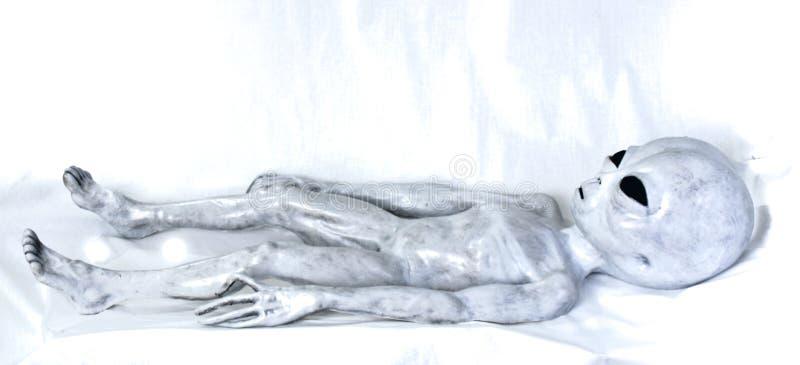 Pose grise étrangère sur le lit image libre de droits