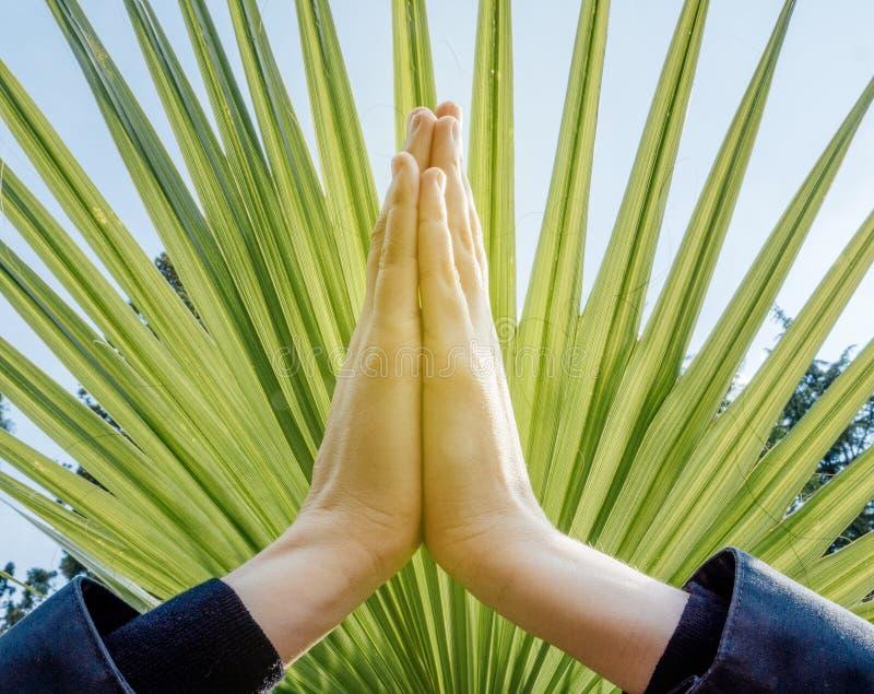 Pose levantada das mãos (mudra do anjali) foto de stock