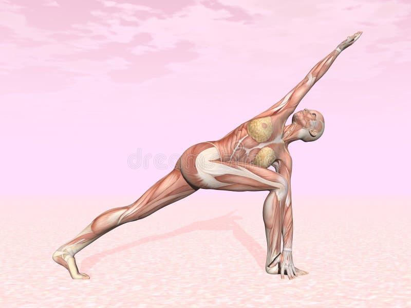 Pose revolvida da ioga do ângulo lateral para a mulher ilustração do vetor