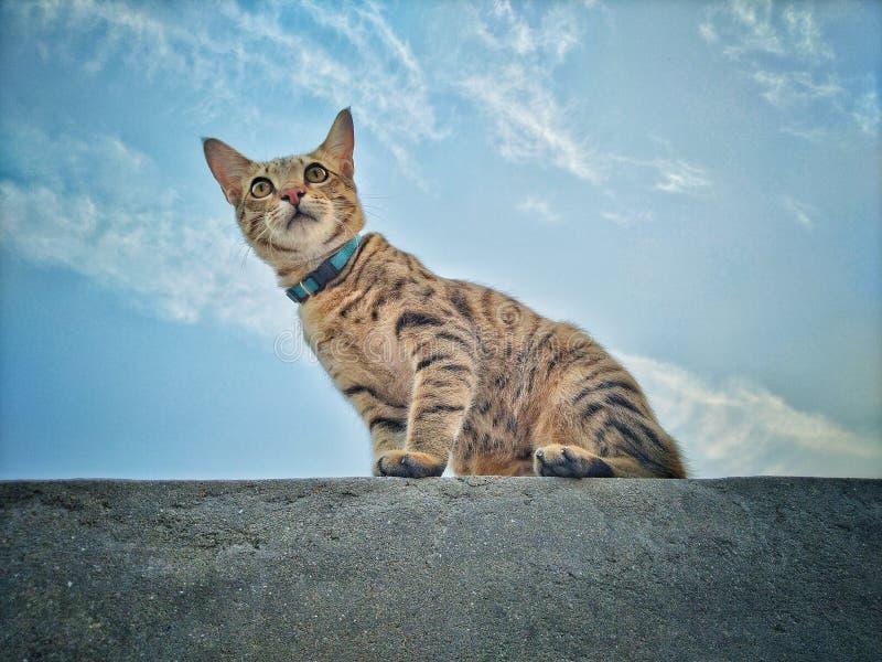 Poser cat. Loveanimal, animallover, iloveanimals stock photos