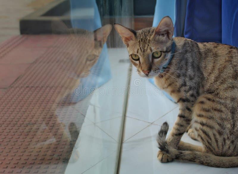 Poser cat. Mirrorimage, cutecat, animallove, iloveanimal stock image