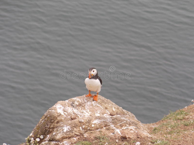 Poser. Looking for fish on his rock royalty free stock image