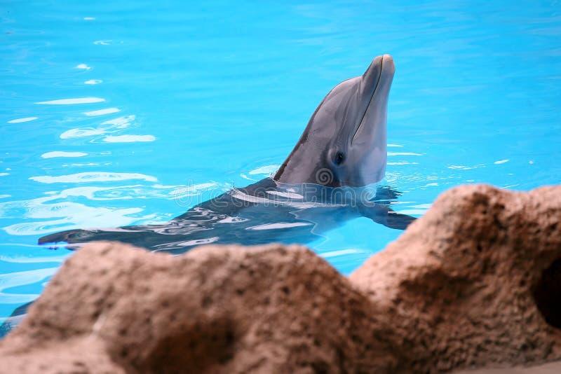 posera för delfin royaltyfri foto