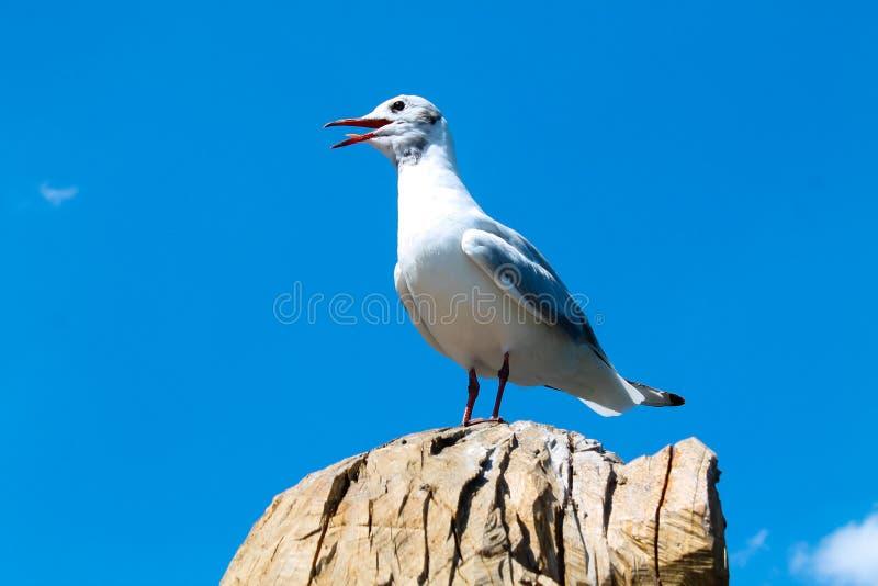 Posera seagullen på ett träd royaltyfri foto